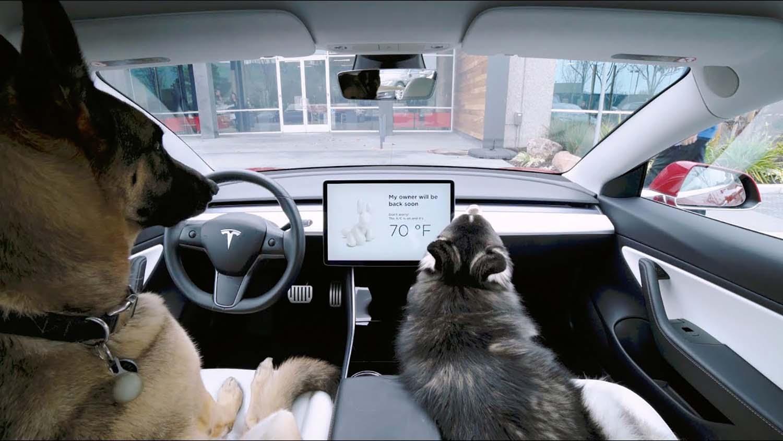 Поради еден детал, сопствениците на кучиња ќе ги засакаат автомобилите на Tesla
