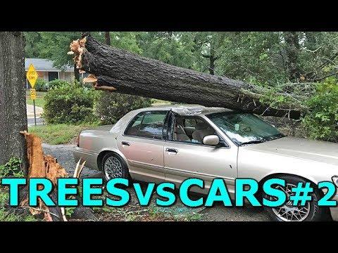 Автомобили VS дрва! КАРАМБОЛ / ВИДЕО