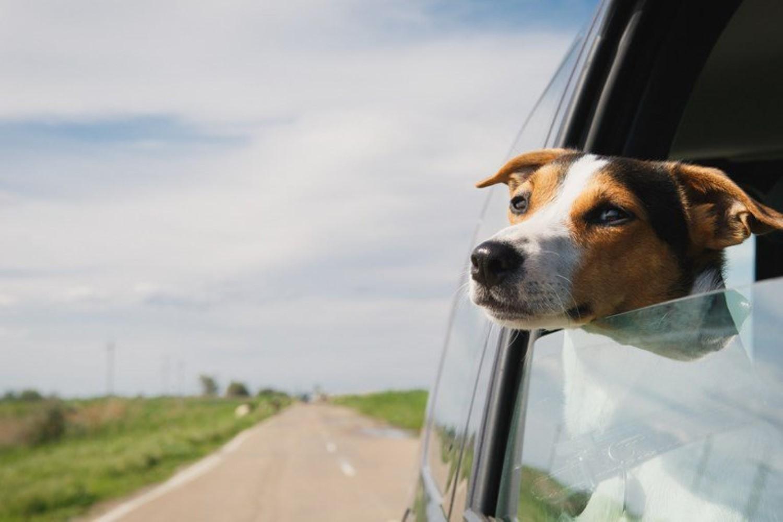 Кучињата во автомобил можат да бидат многу опасни