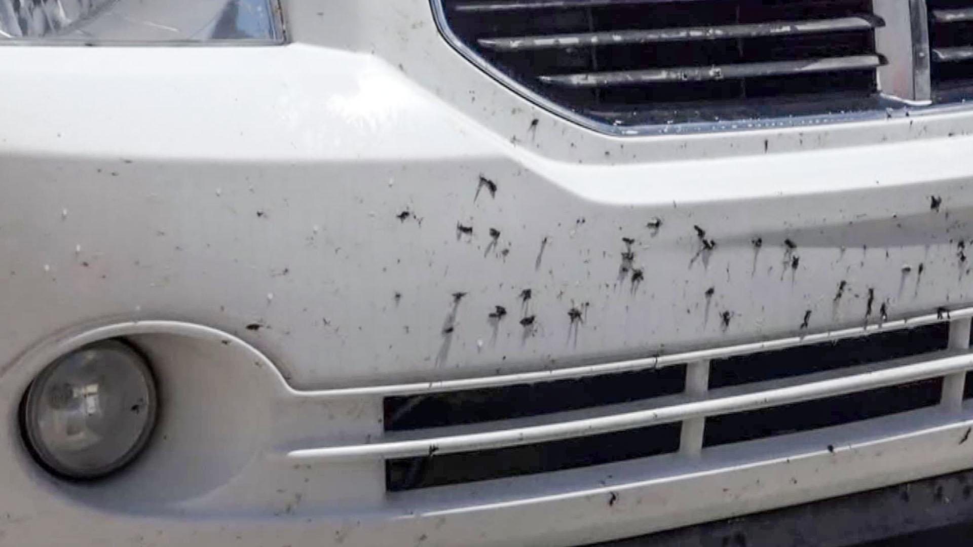 Остатоците од инсекти на возилото треба да се отстранат што е можно поскоро за да се спречи оштетување на бојата!